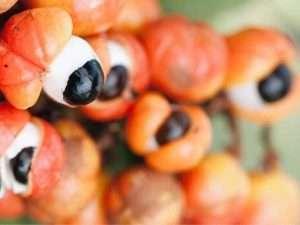 Guarana-die-9-Vorteile-von-dem-Brasilianischen-Superfood
